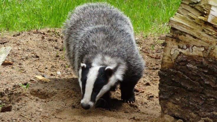 Badger encourages us to fearlessly shout our new story to the world